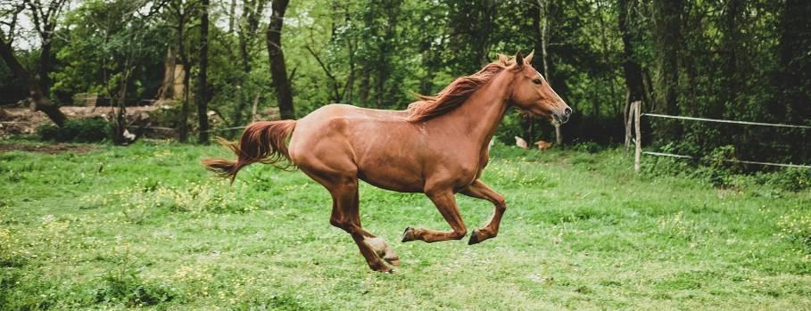 centre equestre vendée