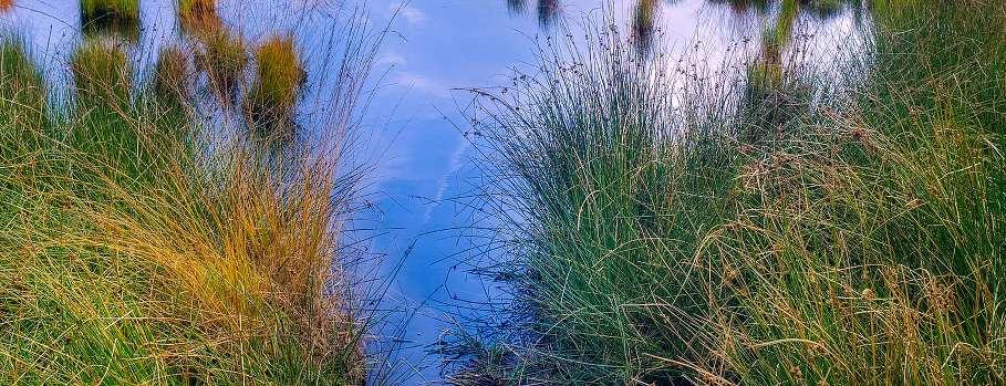 marais jard sur mer